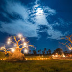 a baobab tree is lit up with lanterns as guests eat dinner under the stars at gomoti plains camp in the okavango delta, botswana