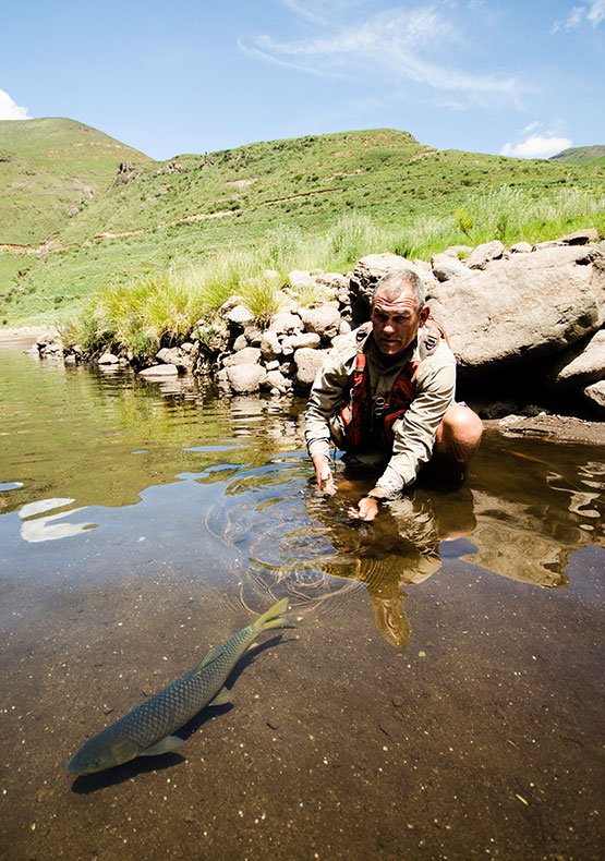 a yellowfish swims away after release in perfectly still conditions at Makhangoa Community Camp, Lesotho