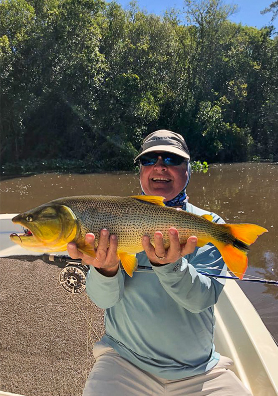 a fly fisherman holds a golden dorado on the bow of the boat at Delta lodge, Argentina