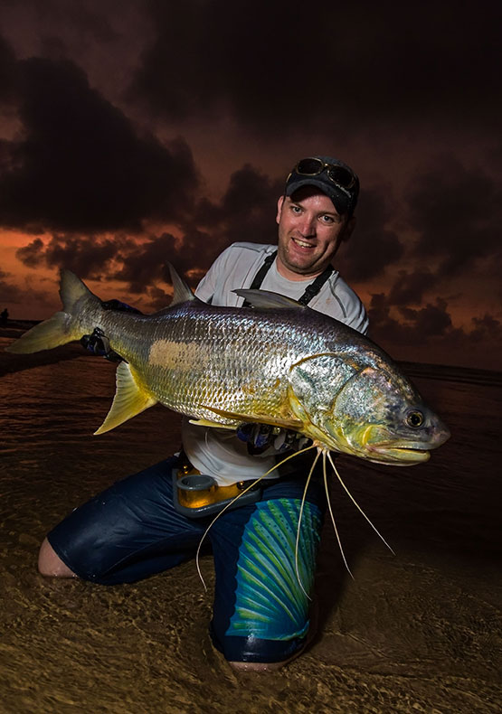 an angler lifts a trophy threadfin at dusk with his knees in the water at Sette Cama, Gabon