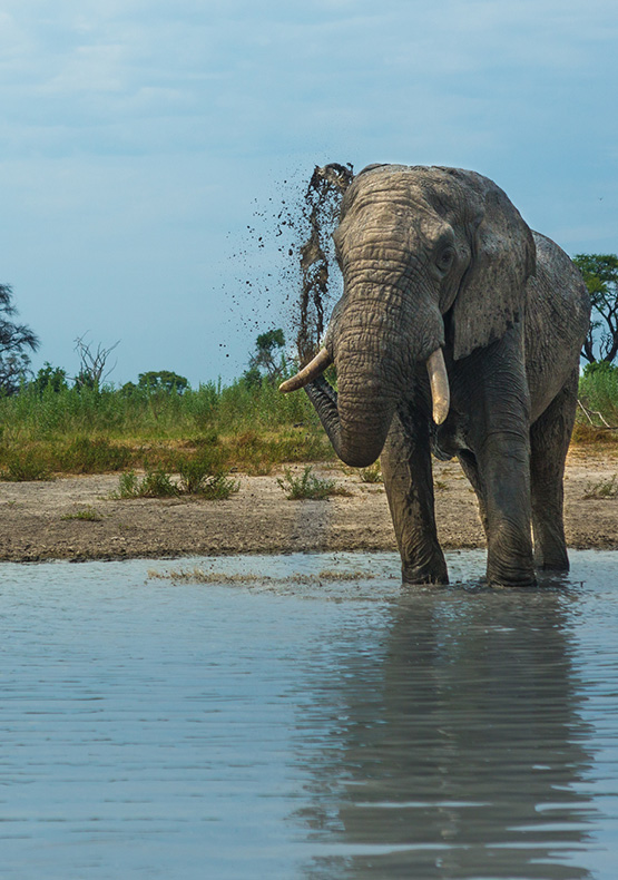 Botswana Safari Holidays package