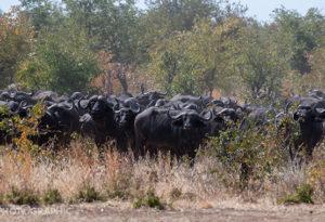 Flights to Deka Camp Hwange National Park