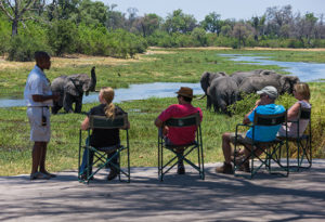 Elephant watching from the lodge in Botswana