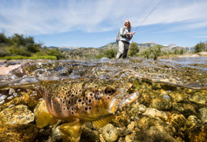 an underwater shot of a brown trout being caught on fly. the lady angler can be seen fighting the fish in the background at Northern Patagonia Lodge, Argentina