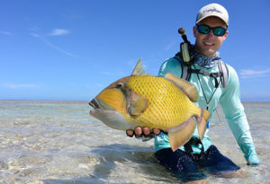 a fly fisherman sits on his knees & lifts a moustache triggerfish on the shallow flats on Providence Atoll, Seychelles
