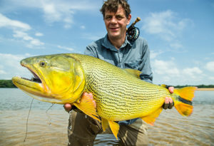 an angler rests on one knee in the water and lifts a trophy golden dorado caught on fly at Suinda Lodge, Argentina