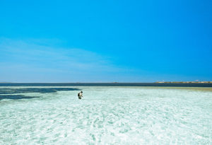 a saltwater fly fisherman is surrounded by bonefish while walking the flats at Cosmoldeo Atoll, Seychelles