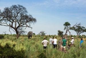 walking safari in the okavango