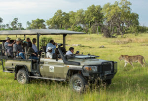 a group of guests watch a lioness in the bushveld from the safety of a safari vehicle at Gomoti Plains camp in the Okavango delta, Botswana