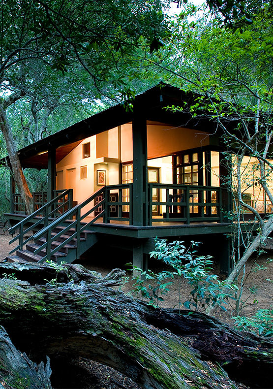 phinda forest lodge accommodation
