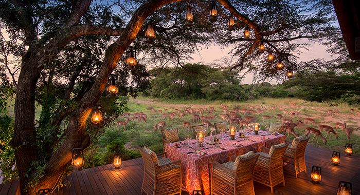 impala graze during dinner at phinda vlei lodge
